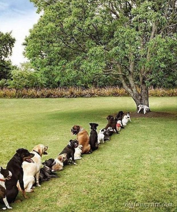 Funny Animals-dog queue