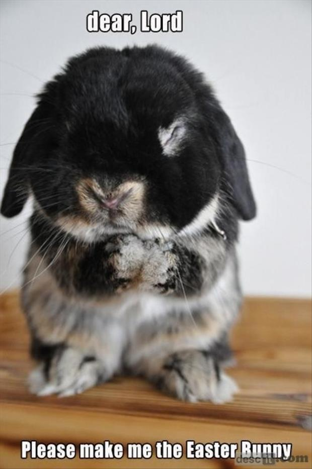 Funny Animals- easter bunny