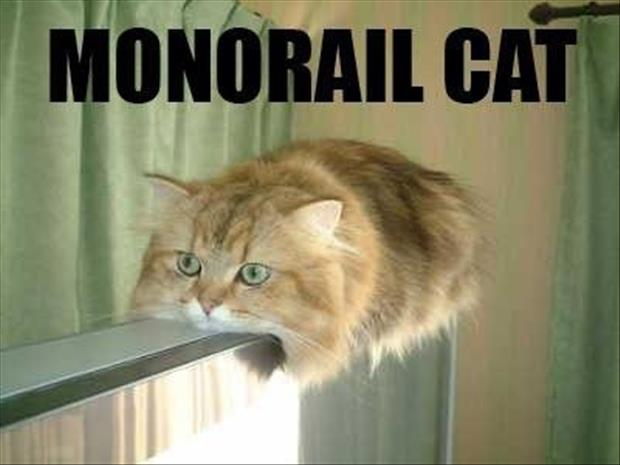 Funny Animals-monrail cat