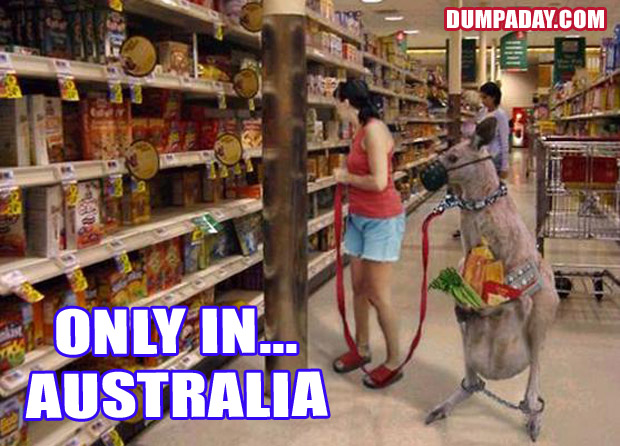Funny Only In Pictures- Australia Kangaroo basket