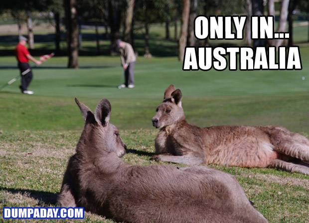 Funny Only In Pictures- Australia
