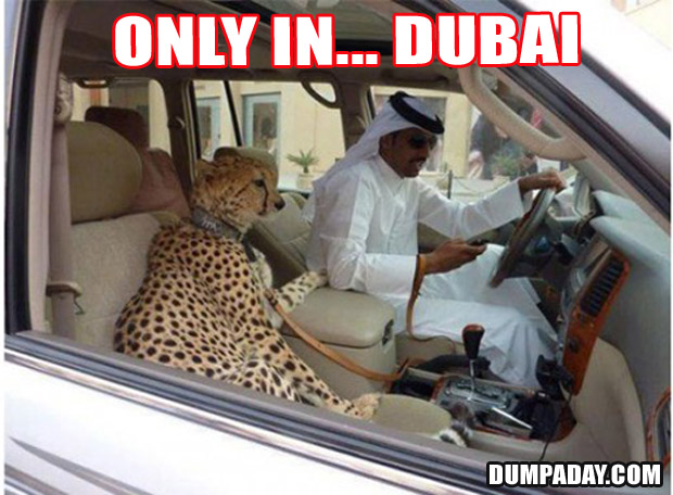 Funny Only In Pictures- Dubai pet