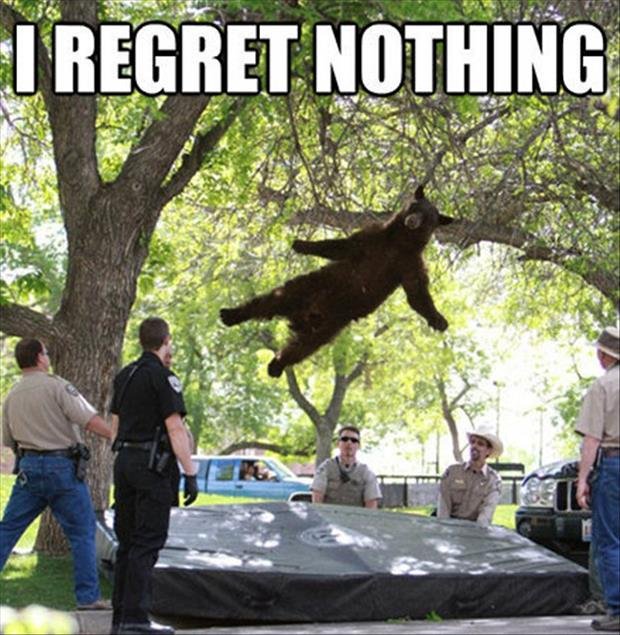 I regret nothing bear