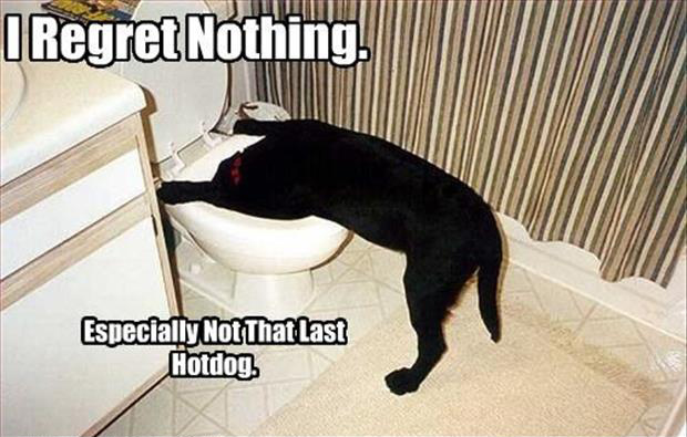 I regret nothing dog in toilet