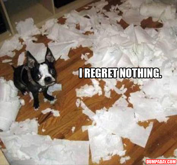I regret nothing funny dog tearing up toilet paper