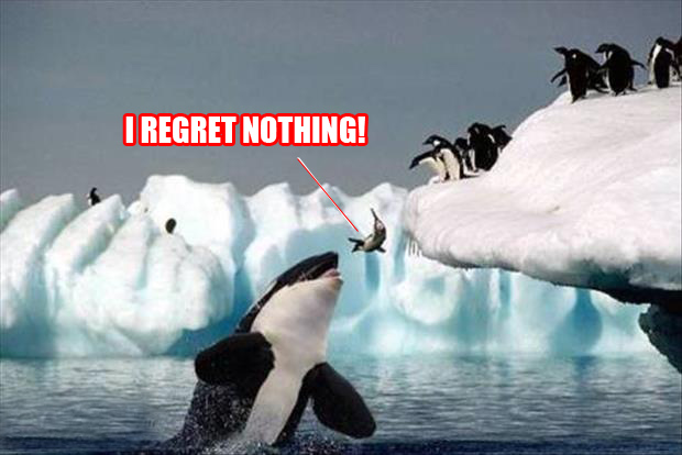 I regret nothing killer whale