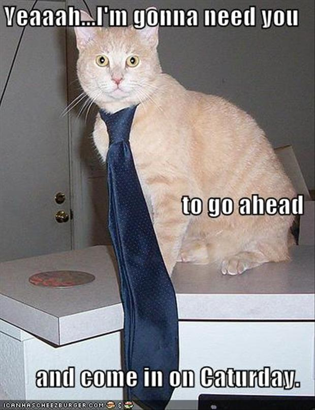 I'm going to need you to come in on saturday funny cat pictures