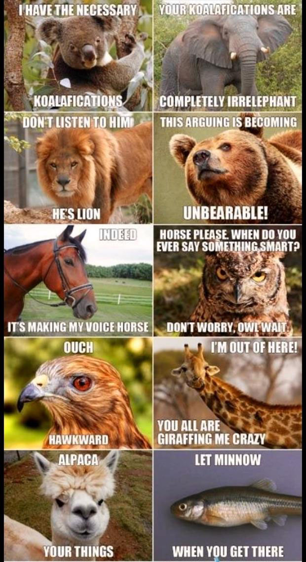Punny Puns- animal pun fun