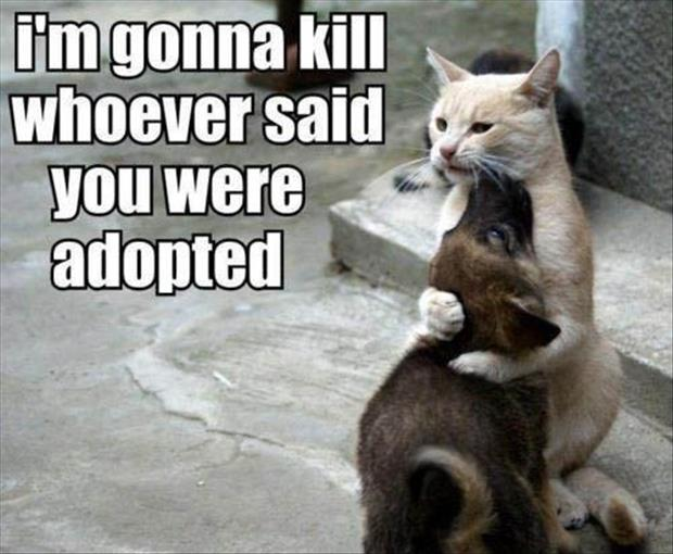 a I'm going to kill whoever said you were adopted