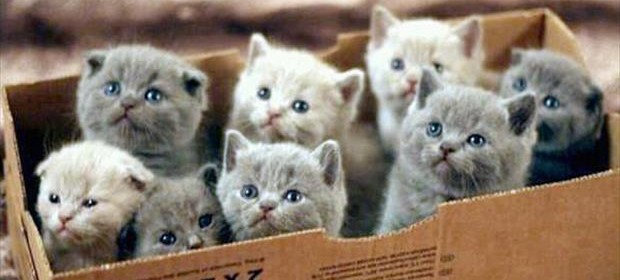 a box full of kittens