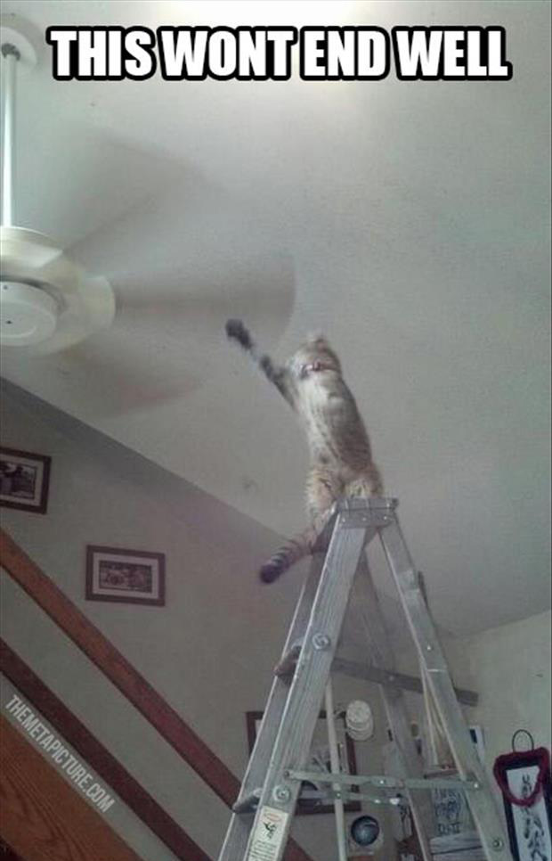 a cat reaches for a fan this won't end well