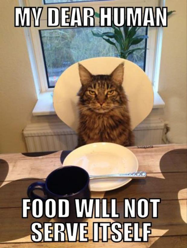 a funny cat at the dinner table