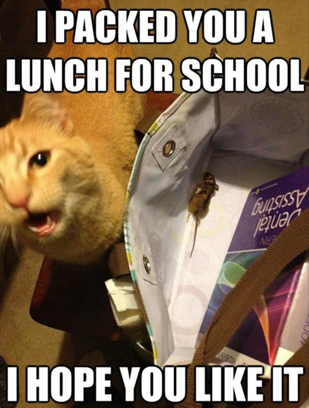 a funny cat packed a lunch for school