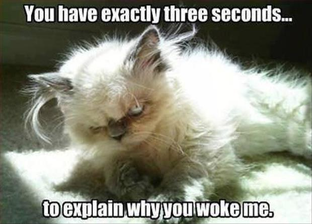 a funny cat wake up