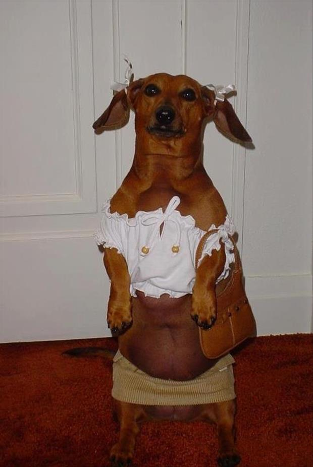 a funny dogs dressed up (18)