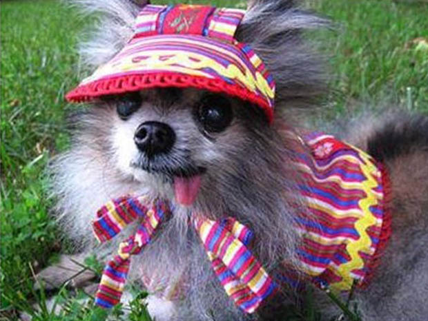 a funny dogs dressed up (3)