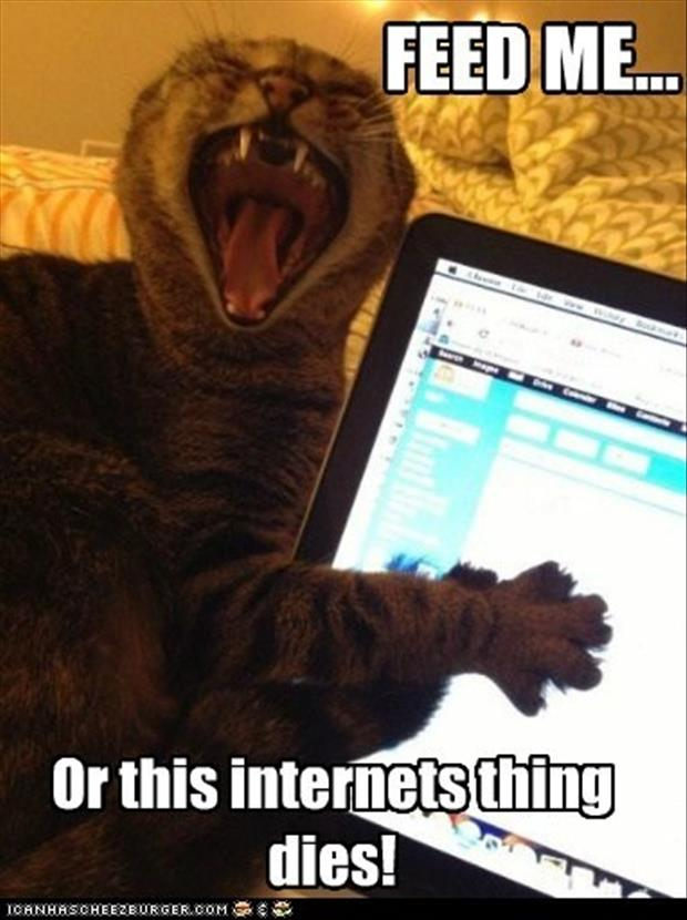 a funny pictures, cat feed me
