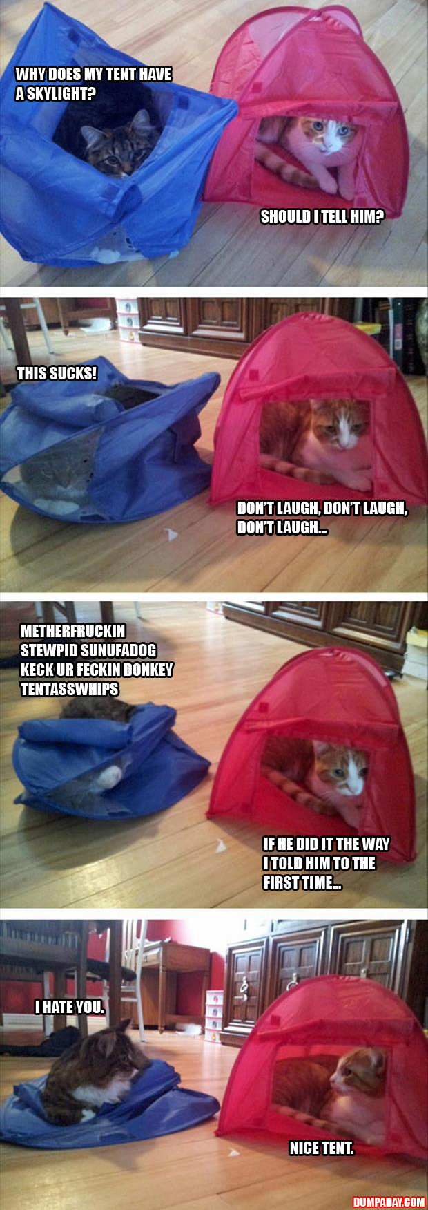 a funny pictures cat tents
