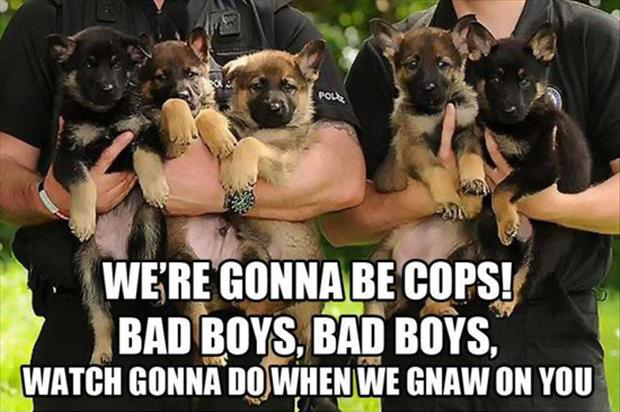 a funny police dogs