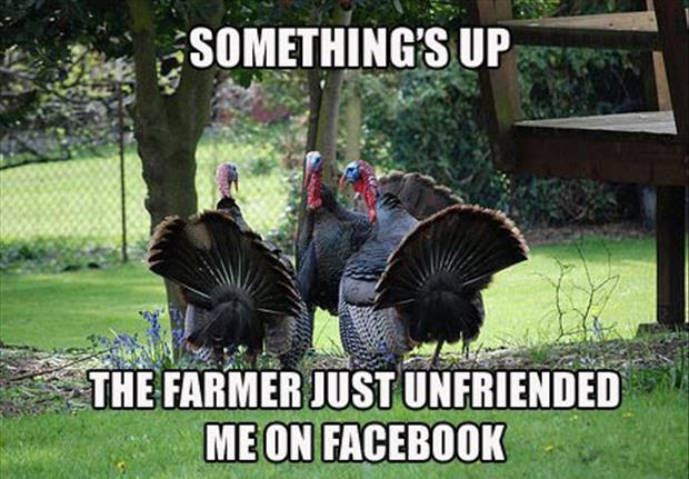 a funny turkey pictures