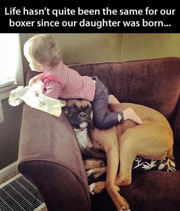 a kids and dogs funny pictures