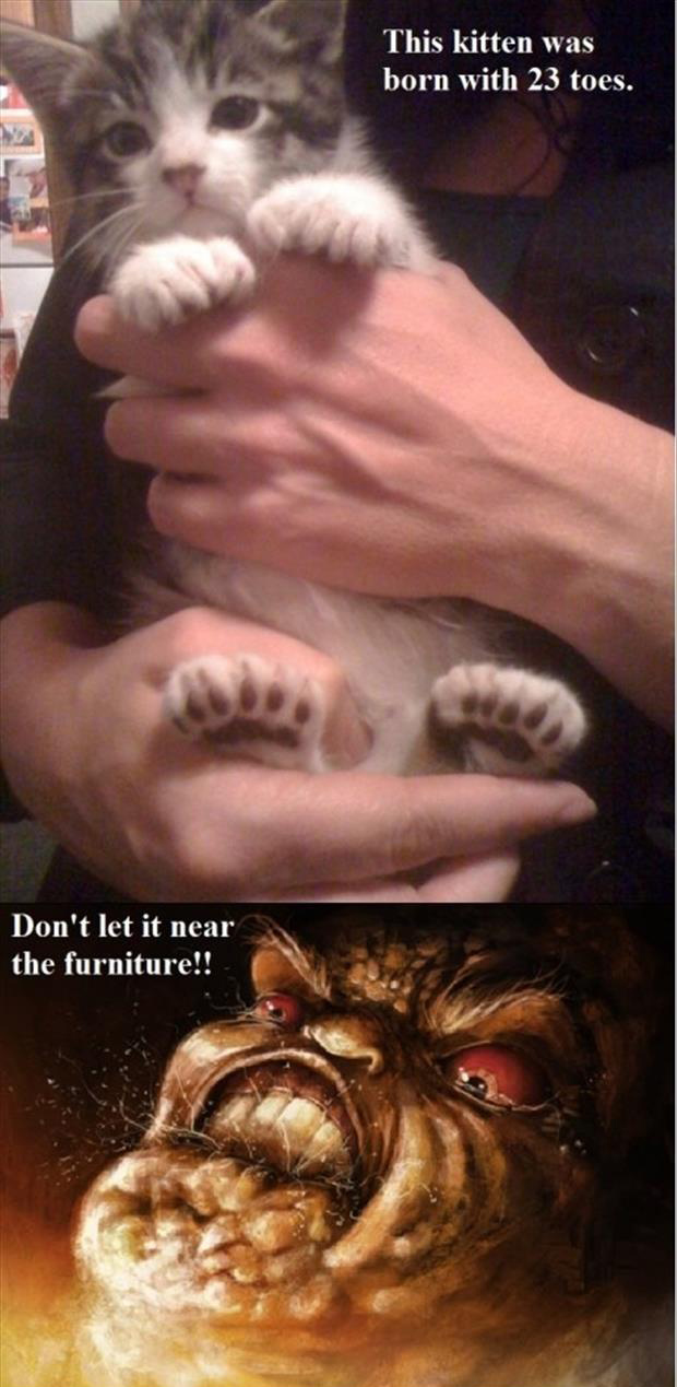 a kitten born with 23 toes