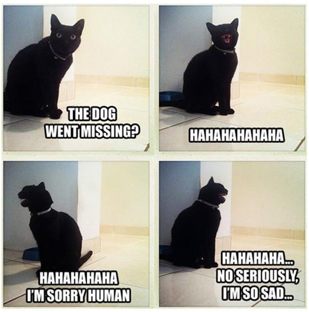 a missing dog cat laughing