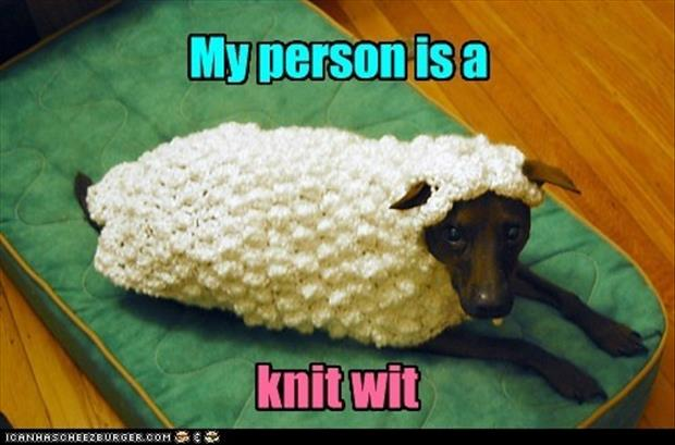 Funny Knitting Pictures : A my person is knit wit funny dog clothes dump day