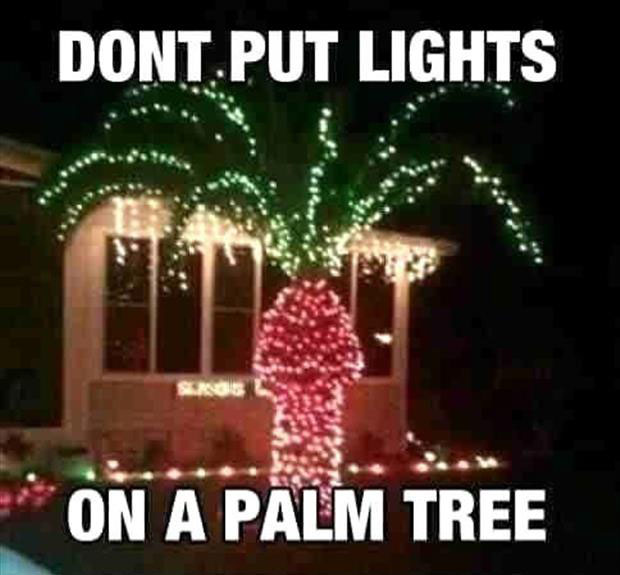 a never put christmas lights on a palm tree