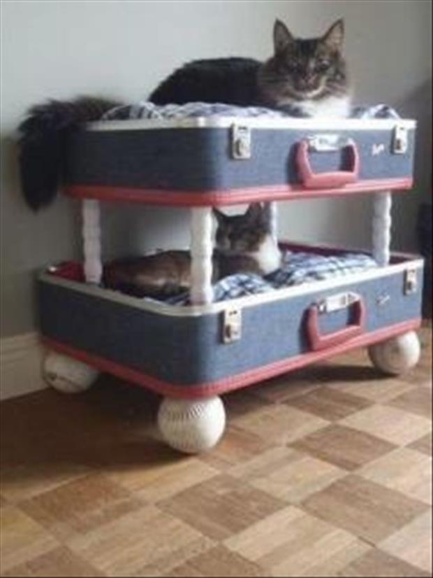a reuse old suit cases for cat beds