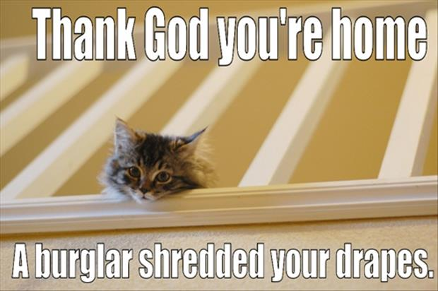 a thank god you're home, cat