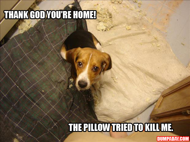 a thank god you're home the pillow attacked me