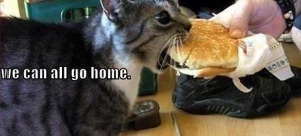 a the cat finally got a cheeseburger