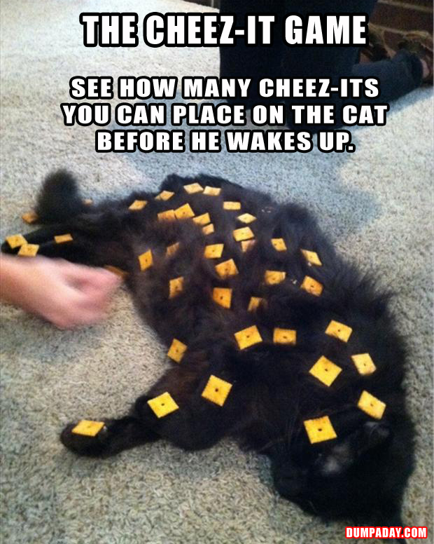 a the cheeze it game funny cat pictures