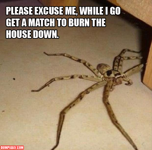 a time to light the house on fire big spiders