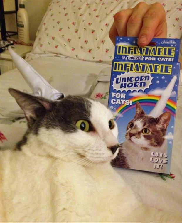 a unicorn horn cats love it