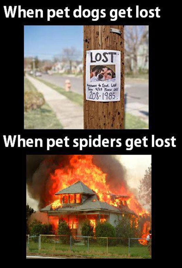 a when pet dogs get lost, funny spiders get lost