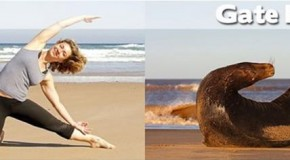 The Best Of Animal Yoga – 30 Pics