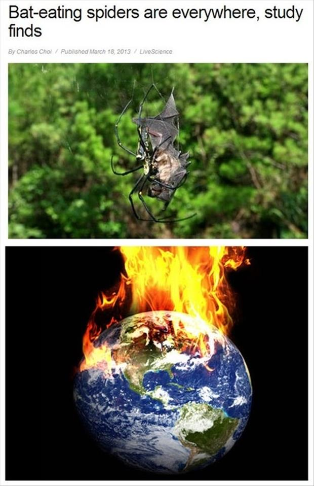 bat eating spiders burn the world