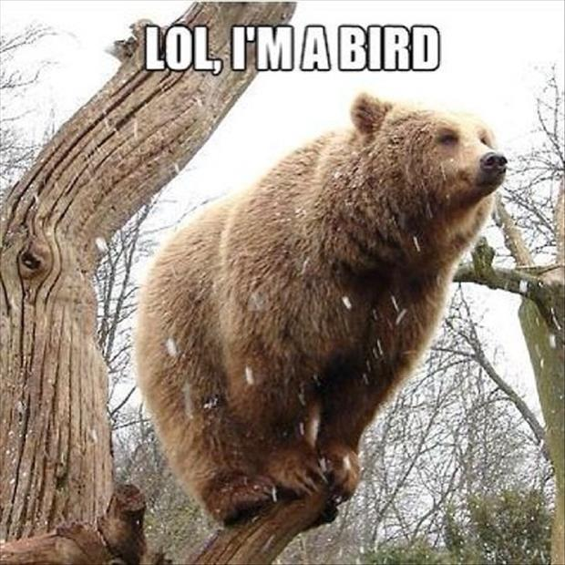 bear is a bird