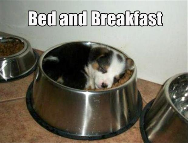 bed and breakfast funny puppies