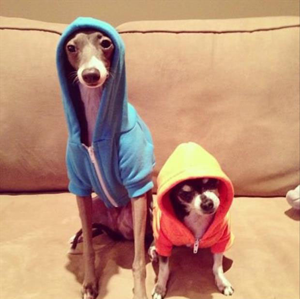 boys in the hoodies