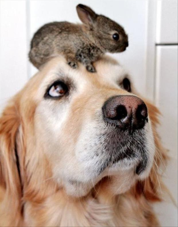 bunny-on-dogs-head