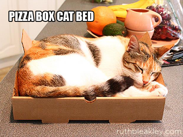 cat bed pizza box