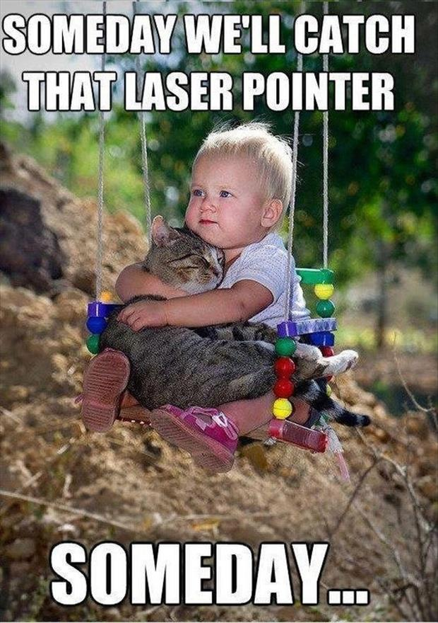 cat catch the laser pointer funny pictures