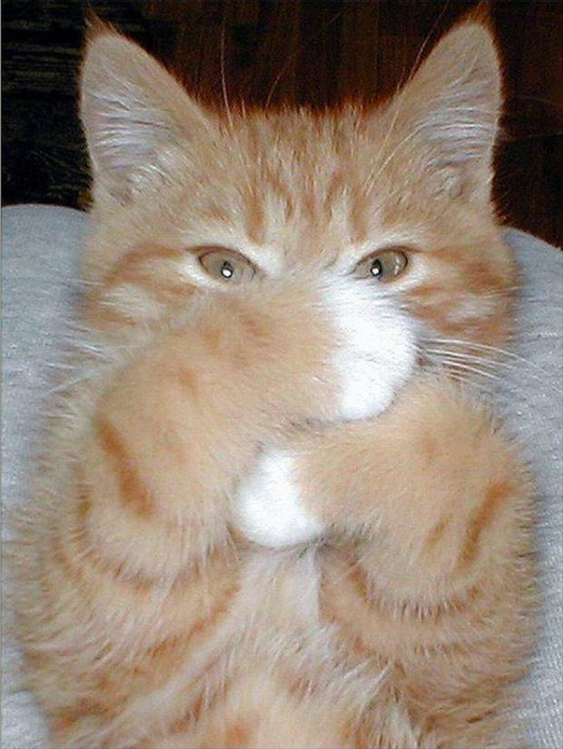 cat covering his face