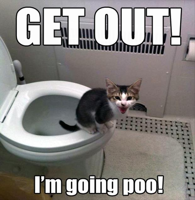 cat going poop in the toilet