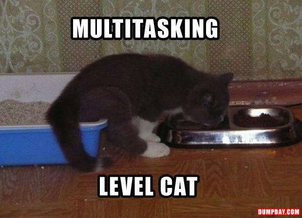 cat going to the bathroom and eating at the same time funny pictures