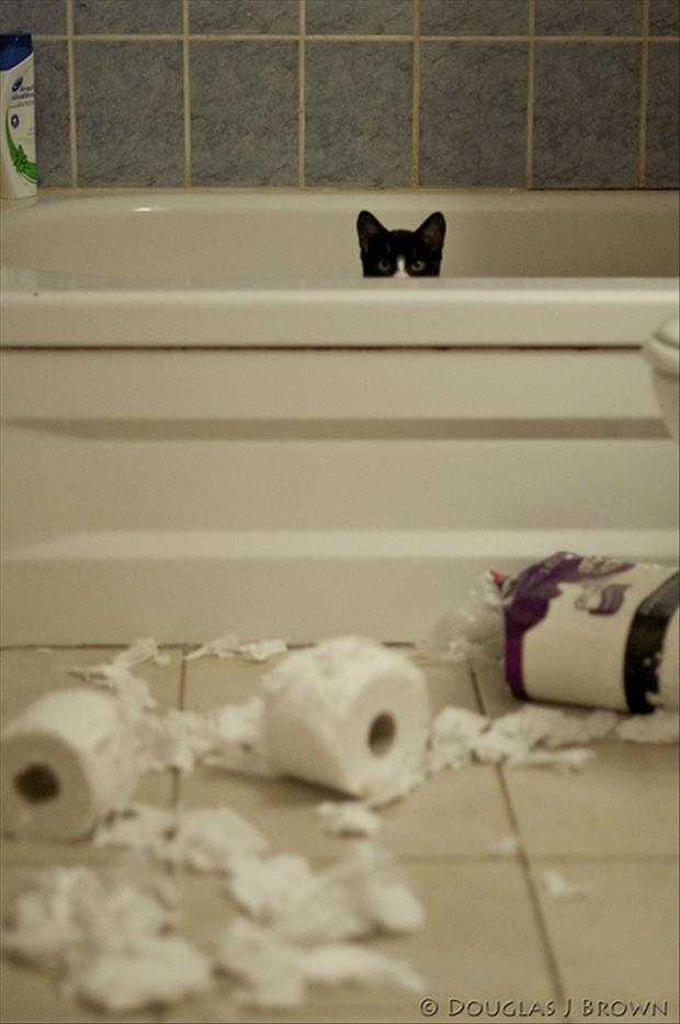 cat hides in the tub