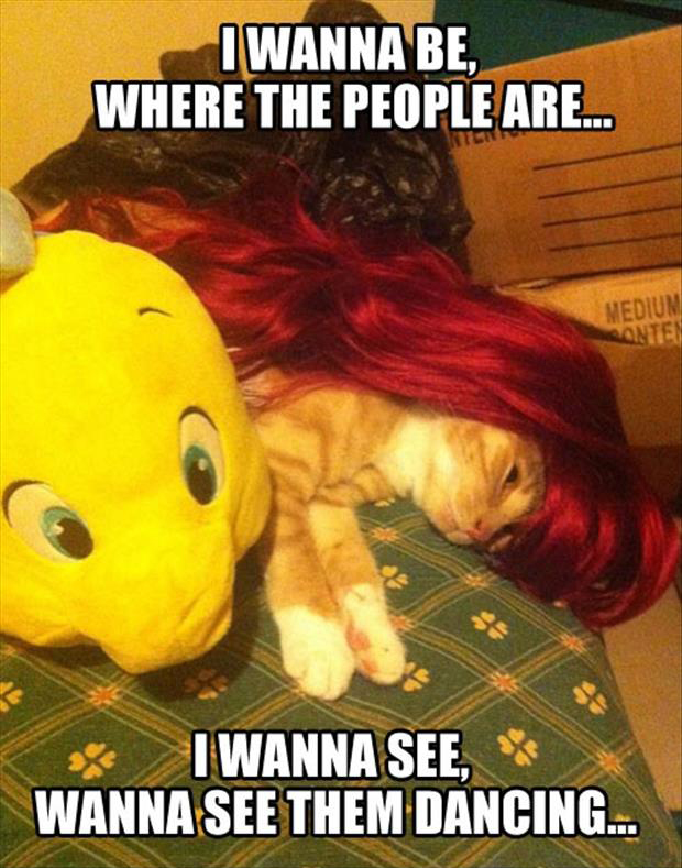 cat is little mermaid